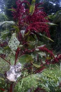 gardenharpie